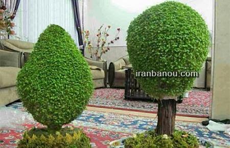 طرز تهیه سبزه عید