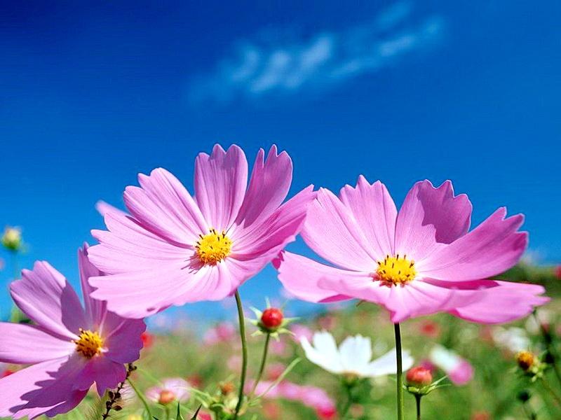 image result for ?تصویر گل زیبا و دلنشین?