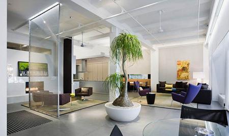 نحوه نگهداری از گیاهان آپارتمانی, گیاهان آپارتمانی