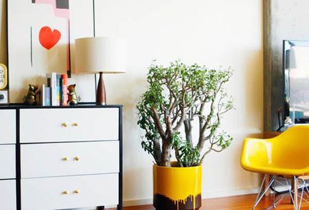 گلدان های مناسب گیاهان آپارتمانی,نکاتی برای مراقبت از گیاهان