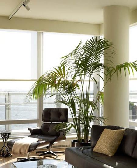 تکنیک های مراقبت از گیاهان آپارتمانی, اصول مراقبت از گیاهان آپارتمانی