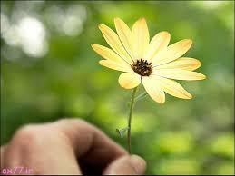 عکس گل های زیبا,عکس پروفایل خاص