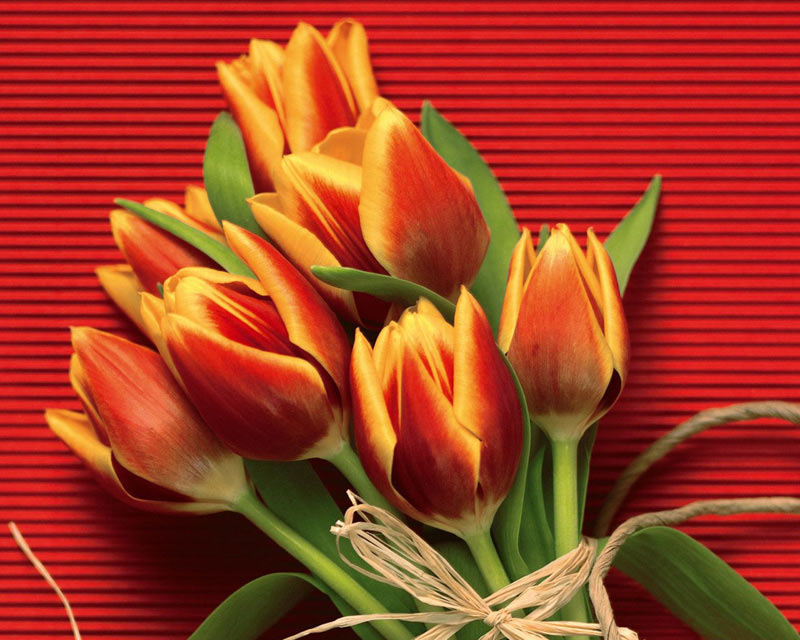 عکس عروس,عکس گل زیبا