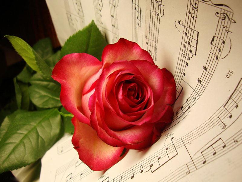 عکس گل های عاشقانه