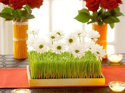 سبزه عید،بذر سبزه عید،سبز کردن سبزه،هنر در خانه