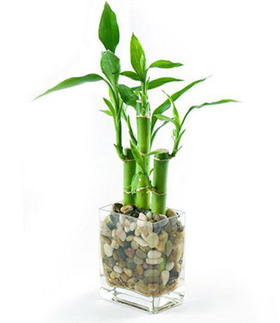 شرایط نگهداری از گیاهان آپاتمانی, شناخت گیاهان آپارتمانی
