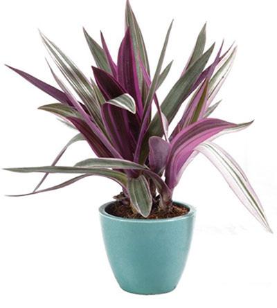بهترین شرایط نگهداری گیاهان آپارتمانی,شرایط نگهداری گیاهان آپارتمانی