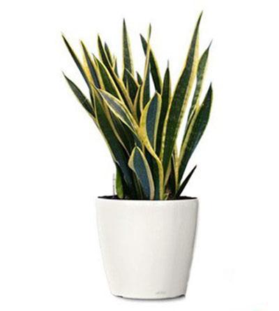 شناخت گیاهان آپارتمانی, آشنایی با شرایط نگهداری گیاهان آپارتمانی