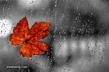 عکس باران پاییزی دونفره