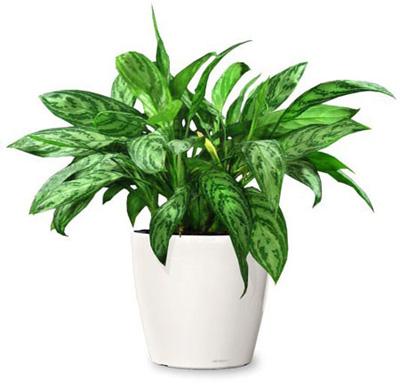 بهترین شرایط نگهداری گیاهان آپارتمانی,اصول نگهداری گیاهان آپارتمانی