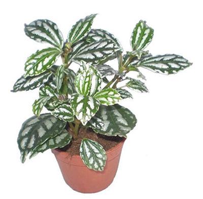 گیاهان آپارتمانی,شرایط نگهداری گیاهان آپارتمانی