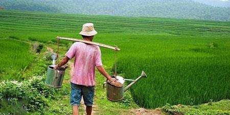 عکسهای جالب,تصاویر دیدنی,مزرعه
