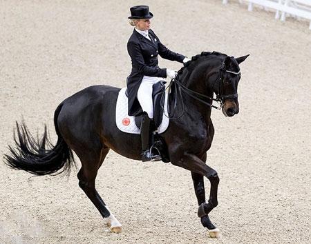عکسهای جالب,عکسهای جذاب, اسب سواری