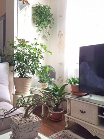 آشنایی با گیاهان آپارتمانی,شرایط نگهداری از گیاهان آپاتمانی