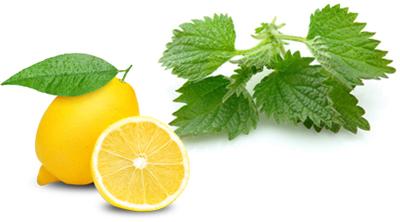 علل کم خونی,علت کم خونی,داروی گیاهی برای کم خونی