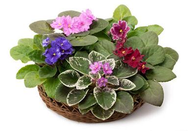اصول نگهداری گیاهان آپارتمانی,گیاهان آپارتمانی