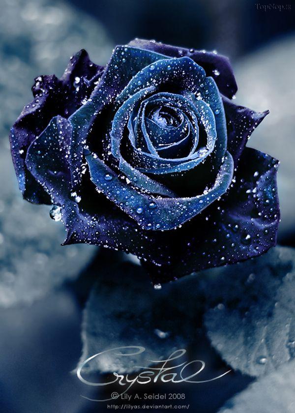 100 عکس گل زیبا برای پروفایل 97 و 2018 | عکس پروفایل گل ...