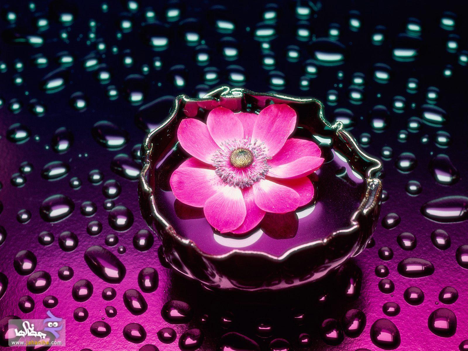 دانلود عکس گل,عکس پروفایل گل