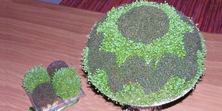 نحوه کاشت سبزه, کاشت سبزه عجله ای