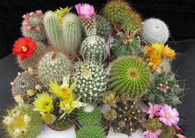 ترفندهای نگهداری گل ها, نحوه تازه نگه داشتن گل های آپارتمانی
