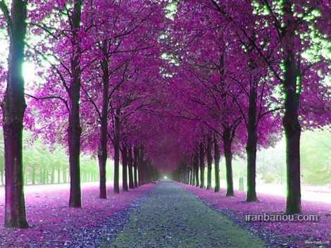 عکس طبیعت با کیفیت بالا