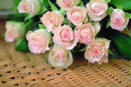 عکس پروفایل گلدان