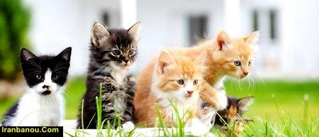 مضرات نگهداری گربه