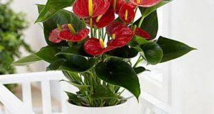 قرص ال دی برای گیاهان