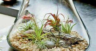 بذر گیاهان هوازی