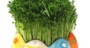 انواع مدل سبزه عید به همراه آموزش سبزه های جدید