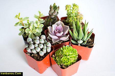 نگهداری گلهای آپارتمانی در زمستان