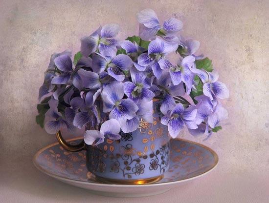 گل و گلدان های زیبا, گل و گلدان های, سفره هفت سین