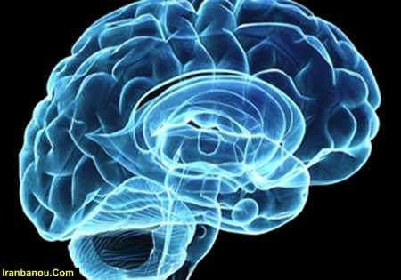 مغز بزرگ