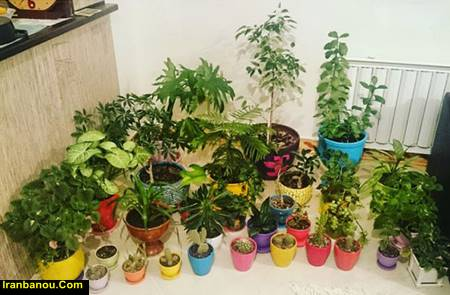 مقاله درباره پرورش گل و گیاه
