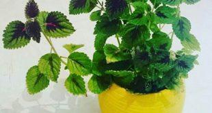 فواید گیاهان اپارتمانی