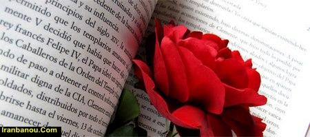 گل رز رونده در گلدان