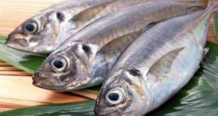 تصویر ماهی سالمون