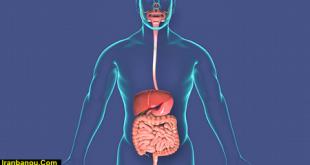 بیماری گوارشی pdf