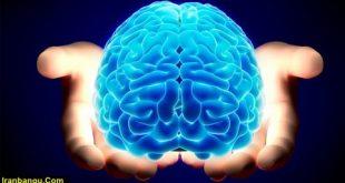 مقاله در مورد مغز انسان