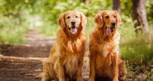 عقیم سازی رایگان سگ