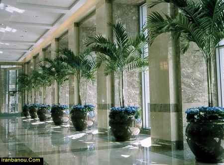 گیاهانی که در شب اکسیژن تولید میکنند