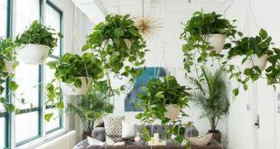 اکسیژن در خانه | اکسیژن سازی در محیط خانه و محل کار با گیاهان