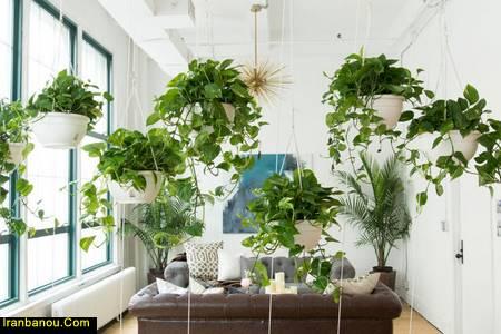 بهترین گیاهان تصفیه کننده هوا ناسا