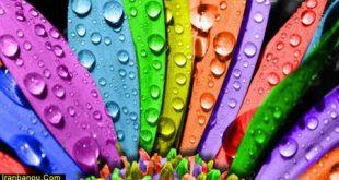 نقش رنگها در زندگی ما