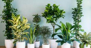 فواید نگهداری از گیاهان | نگهداری از گل و گیاه در آپارتمان