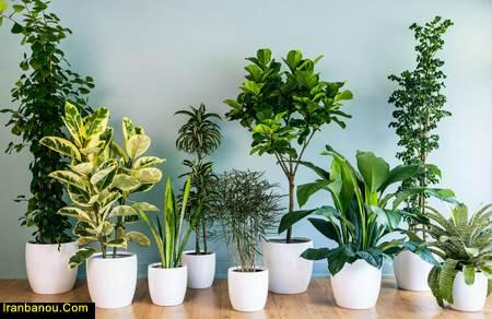 فواید نگهداری از گیاهان   نگهداری از گل و گیاه در آپارتمان