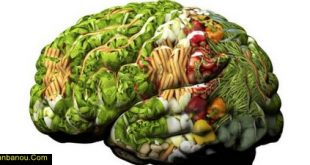 تقویت کننده حافظه گیاهی