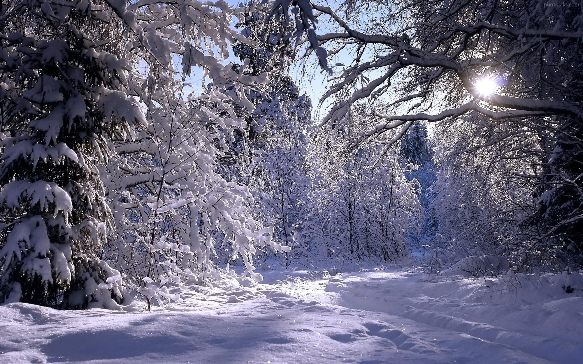 https://iranbanou.com/wp-content/uploads/2019/01/Rambling-in-winter-forest.jpg