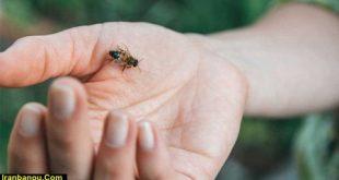 درمان ورم ناشی از نیش حشرات