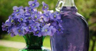 خواص گل بنفشه در طب اسلامی